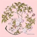 トレシー® 和のアートシリーズ A1919P-ZESHIN  柴田是真 19×19cm  桜(さくら)