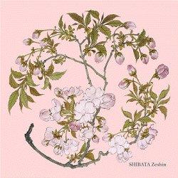 画像1: トレシー® 和のアートシリーズ A1919P-ZESHIN  柴田是真 19×19cm  桜(さくら)